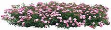 gify animacja obrazki png zielono i wiosennie plants
