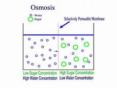 what type of transport is osmosis movement across the plasma membrane the movement of