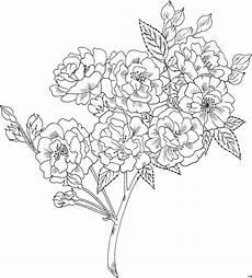 Malvorlagen Blumen Gratis Friscostrauss Ausmalbild Malvorlage Blumen