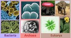 Archaea Examples Tree Of Life Domains Bacteria Archaea Amp Eukarya Study Com