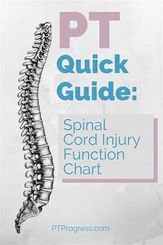 Spinal Levels Chart Spinal Cord Injury Level Quick Reference