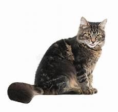 Malvorlage Sitzende Katze Sitzende Katze Stockfoto Bild Tabby Vertikal Katze