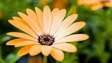 flower wallpaper in hd flowers macro hd wallpapers