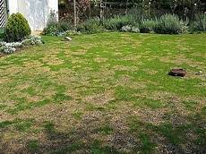 Brown Patch Grass How To Get Rid Of Brown Patches In Your Lawn The Garden