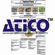 Educational Charts Manufacturers In India Educational Charts Manufacturer Supplier Amp Exporters In