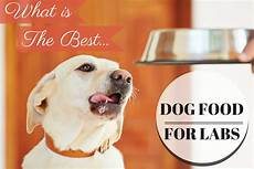 Labrador Puppy Food Chart India Best Dog Food For Labradors A Complete Guide 2020