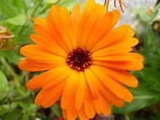 immagini piã di fiori foto di fiori di montagna