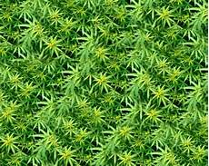 Download Weed Pictures Free 21 Weed Wallpapers In Psd Vector Eps