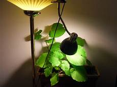Types Of Light Bulbs For Growing Plants Types Of Grow Lights