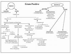 Gram Positive And Gram Negative Bacteria Chart My Scientific Blog Research And Articles Identification