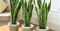 piante da letto insonnia le 8 piante da tenere in da letto per