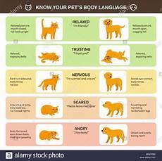 Cat Behavior Chart Printable Cat Body Language Chart