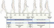Gait Cycle Fundamentals Of Human Gait Musculoskeletal Key