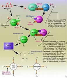 Hypersensitivity Reaction Hypersensitivity Woooootw