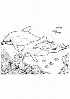 Delphin Malvorlagen Zum Ausdrucken Zum Ausdrucken Ausmalbild Delphine Und Viele Fische Zum Ausdrucken