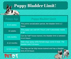 Puppy Exercise Chart How To Train A Puppy Your Ultimate Guide Petdt