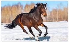 pferd schnee b 228 ume wandtattoo wandsticker wandaufkleber