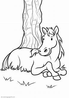 pferde 62 malvorlagen xl