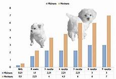 Teacup Poodle Weight Chart Maltese Puppy Growth Chart