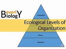 Levels Of Organization Ecological Levels Of Organization Youtube