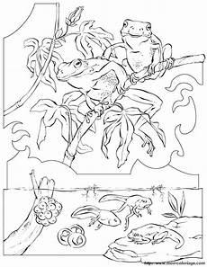 Frosch Malvorlagen Jogja Ausmalbilder Malvorlagen F 252 R Lehrkr 228 Fte Bild Frosch