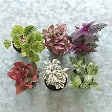 Best Plants For Low Light Terrarium Terrarium Plant Collection Low Terrain