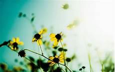 best flower desktop wallpaper hd flowers wallpapers free
