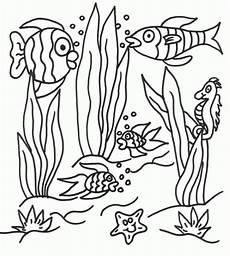 ausmalbilder malvorlagen algen kostenlos zum ausdrucken
