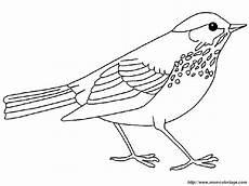 Malvorlage Vogel Zum Ausdrucken Ausmalbilder Vogel Kostenlos Malvorlagen Zum Ausdrucken