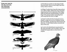 Bird Wingspan Chart Our Programs Pacific Southwest Region