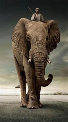 iphone x wallpaper elephant elephant iphone wallpaper wallpapersafari