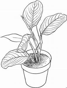 blumentopf mit pflanze ausmalbild malvorlage blumen