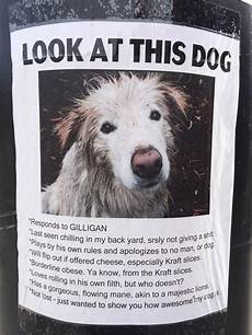 Lost Dog Poster Maker This Hilarious Quot Lost Dog Quot Poster I Found A Couple Years