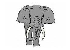 malvorlagen elefanten