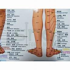 Reflexology Points In The Leg Reflexology Points