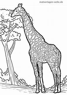 malvorlage giraffe gratis malvorlagen zum with