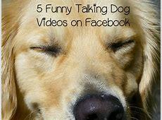5 Funny Talking Dog Videos on Facebook   DogVills