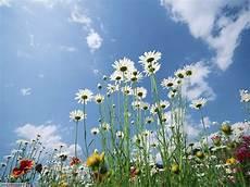 immagini piã di fiori foto fiori di prato per sfondi settemuse it