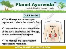 Kidney Patient Diet Chart In Urdu Best Diet Plan For Kidney Failure Patients And Avoid Dialysis