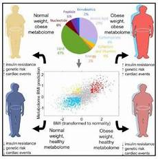 The Metabolome A Way To Measure Obesity And Health Beyond