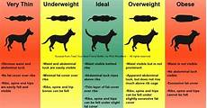Ideal Weight For Dogs Weight Chart Weight The Labrador Forum