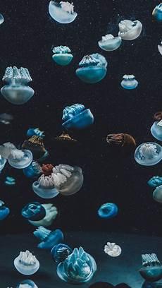Iphone X Wallpaper Jellyfish by Underwater Hd Iphone 6 Wallpaper Impremedia Net