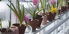 piante da davanzale rinvasare le piante da appartamento la casa in ordine