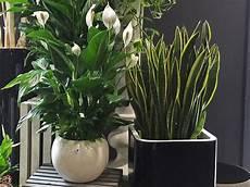 piante verdi da interno foto piante verdi e piante fiorite fiorito