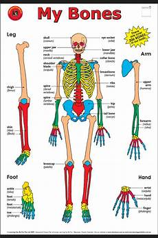 Full Body Anatomy Chart August 2014 Know It All
