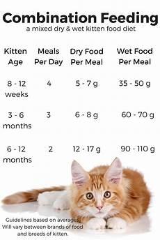 Kitten Eating Chart Feeding Your Kitten The Happy Cat Site