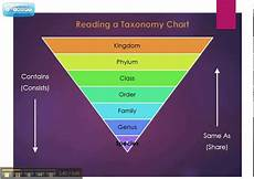 Human Classification Taxonomy Chart Taxonomy Chart Explained Youtube