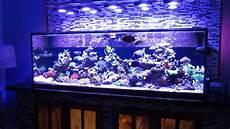 Saltwater Fish Tank Lights Saltwater Fish Tank Reef Aquarium Myreefliving Ben 200