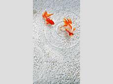 iPhone Fish Wallpapers Free Download   PixelsTalk.Net