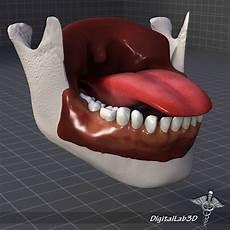 Tongue Anatomy 3d Model Human Tongue Anatomy Cgtrader